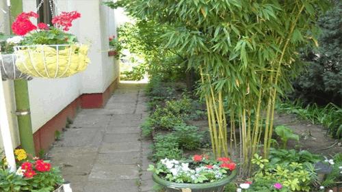 trồng tre và trúc trước nhà hợp phong thủy