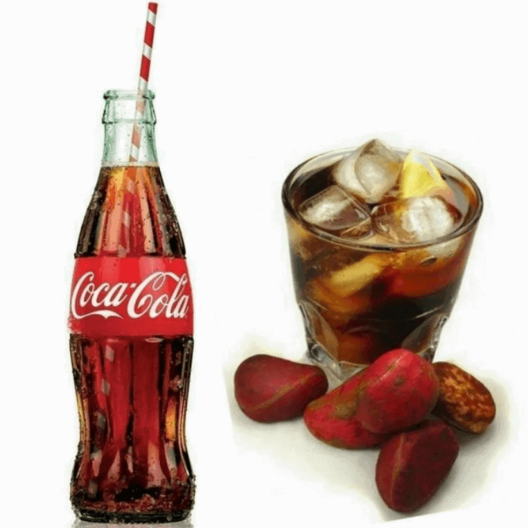 hạt kola thành phần tạo nên coca cola